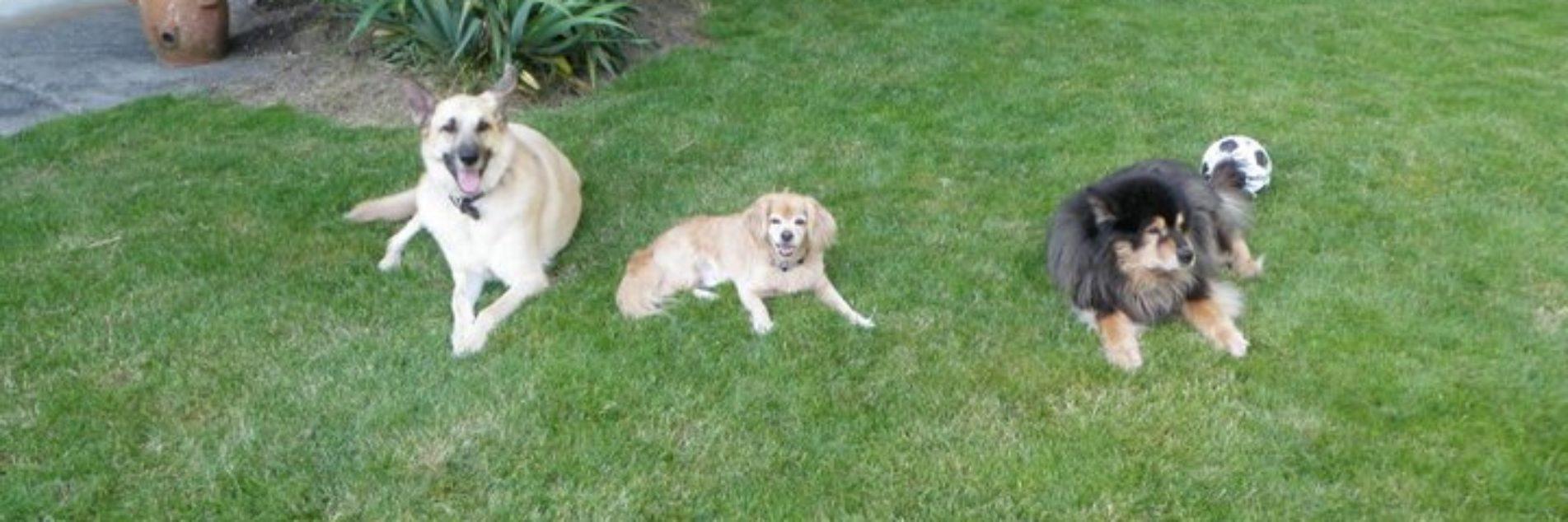 PAALS4Life Dog Training - Chilliwack, BC